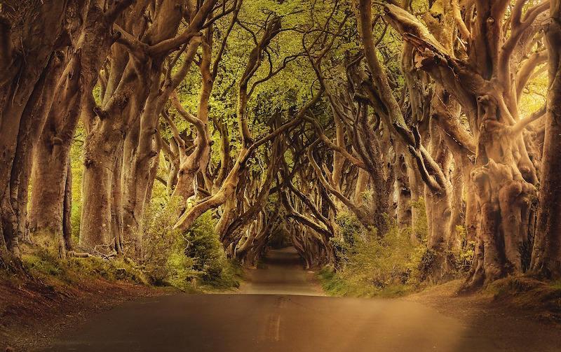 Dark Hedges: History And All The Things You Need To Know - Ireland Travel Guides