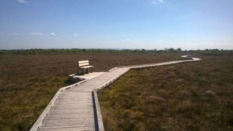 Clara Bog Walkway