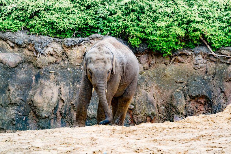 Phoenix Park & Zoo