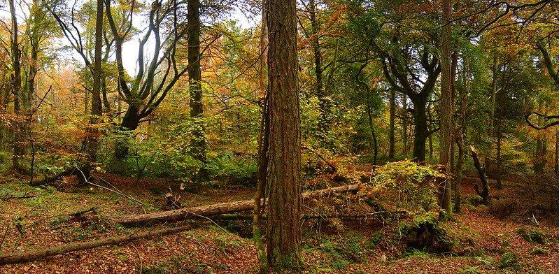 Slieve Gullion Forest Park