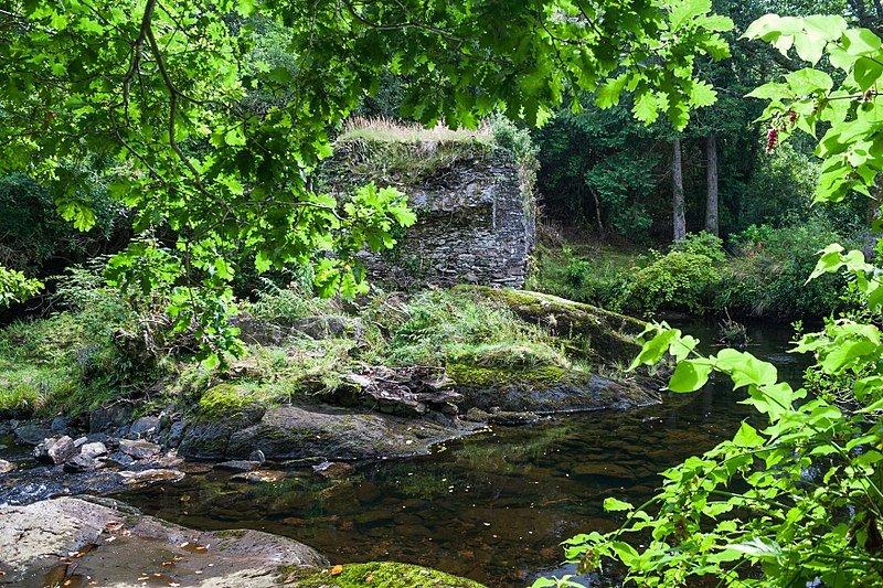 Glengarriff wood nature reserve