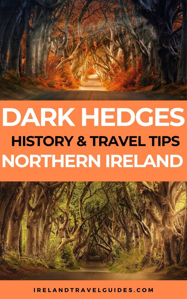 Dark Hedges: History And All The Things You Need To Know